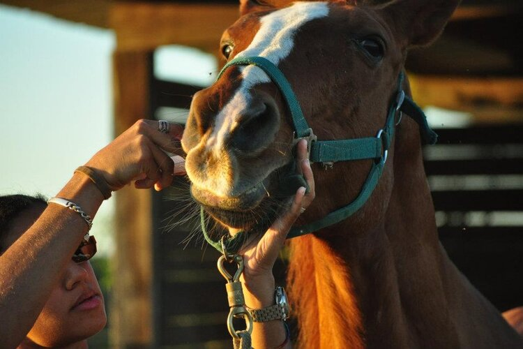 vermifuge naturel cheval avis